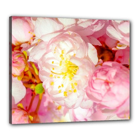 Pink Flowering Almond Flowers Canvas 24  X 20  by FunnyCow