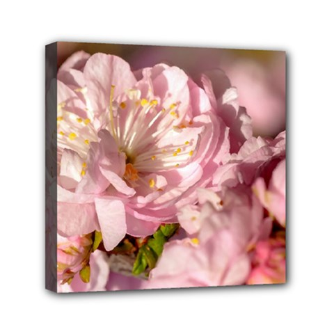 Beautiful Flowering Almond Mini Canvas 6  X 6  by FunnyCow