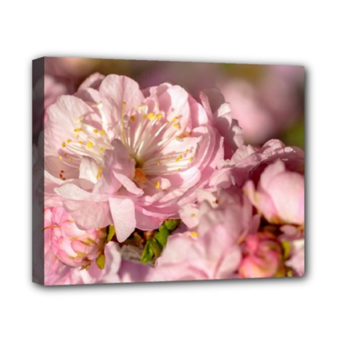 Beautiful Flowering Almond Canvas 10  X 8  by FunnyCow