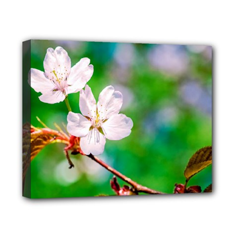 Sakura Flowers On Green Canvas 10  X 8  by FunnyCow