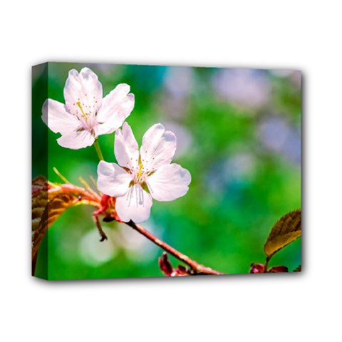 Sakura Flowers On Green Deluxe Canvas 14  X 11  by FunnyCow