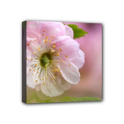 Single Almond Flower Mini Canvas 4  X 4  by FunnyCow