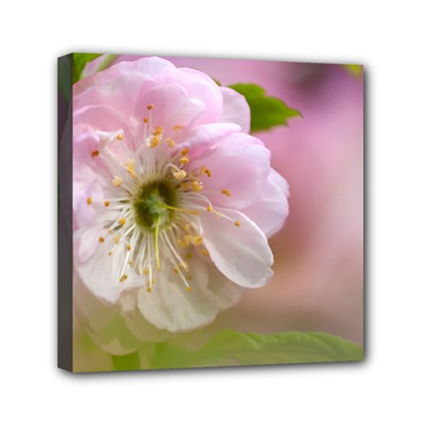 Single Almond Flower Mini Canvas 6  X 6  by FunnyCow