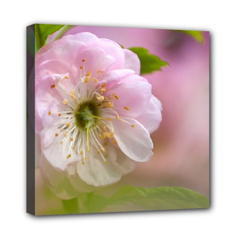 Single Almond Flower Mini Canvas 8  X 8  by FunnyCow