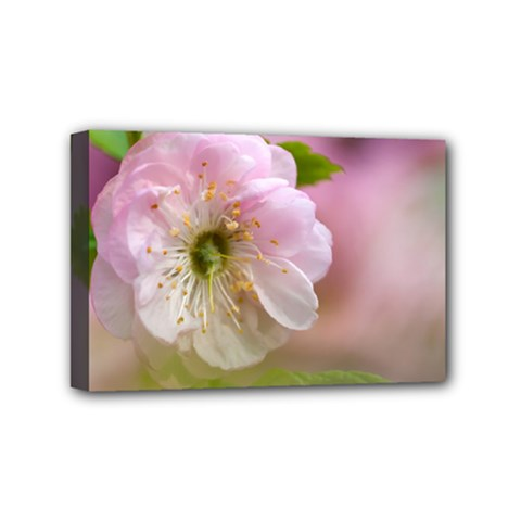 Single Almond Flower Mini Canvas 6  X 4  by FunnyCow