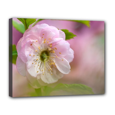 Single Almond Flower Canvas 14  X 11  by FunnyCow