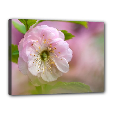 Single Almond Flower Canvas 16  X 12  by FunnyCow