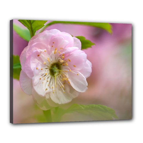 Single Almond Flower Canvas 20  X 16  by FunnyCow