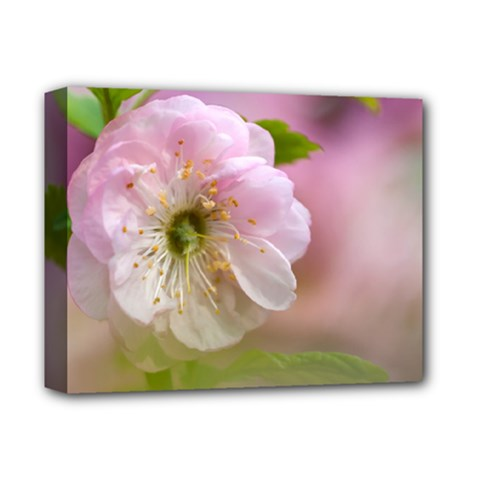 Single Almond Flower Deluxe Canvas 14  X 11  by FunnyCow