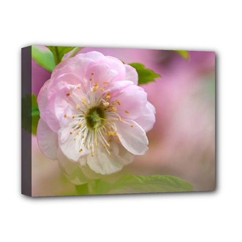 Single Almond Flower Deluxe Canvas 16  X 12   by FunnyCow