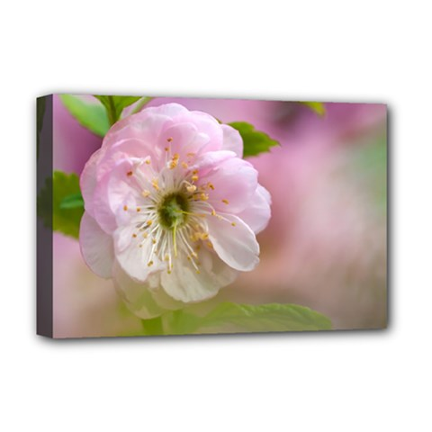 Single Almond Flower Deluxe Canvas 18  X 12   by FunnyCow