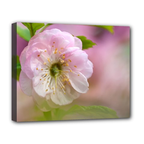Single Almond Flower Deluxe Canvas 20  X 16   by FunnyCow