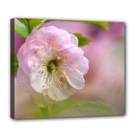 Single Almond Flower Deluxe Canvas 24  X 20   by FunnyCow