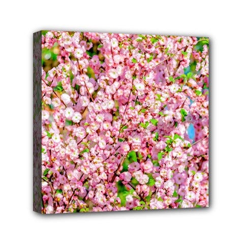 Almond Tree In Bloom Mini Canvas 6  X 6  by FunnyCow