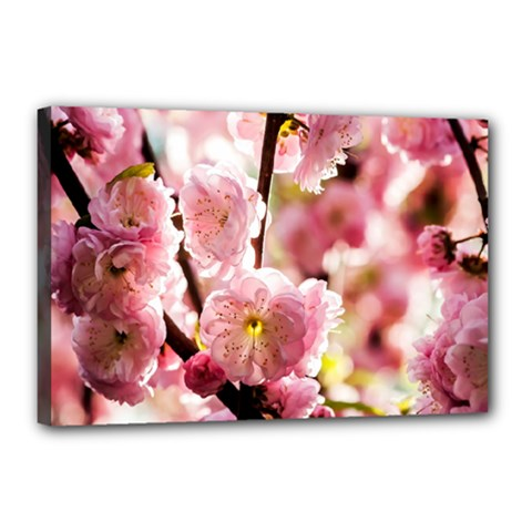 Blooming Almond At Sunset Canvas 18  X 12  by FunnyCow