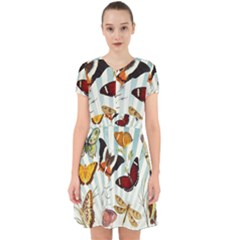 Butterfly 1064147 960 720 Adorable In Chiffon Dress