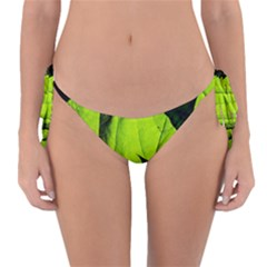 Window Of Opportunity Reversible Bikini Bottom by FunnyCow