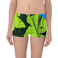 Window Of Opportunity Reversible Boyleg Bikini Bottoms by FunnyCow