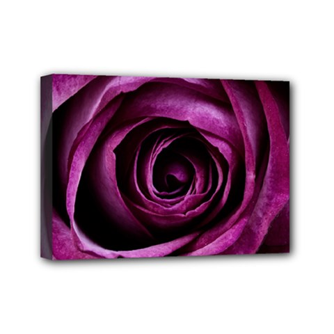 Plant Rose Flower Petals Nature Mini Canvas 7  X 5  (stretched) by Sapixe
