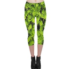 Green Hedge Texture Yew Plant Bush Leaf Capri Leggings  by Sapixe