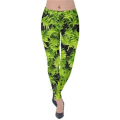 Green Hedge Texture Yew Plant Bush Leaf Velvet Leggings by Sapixe