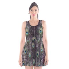 Background Peacock Feathers Scoop Neck Skater Dress