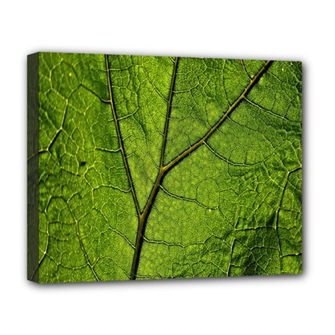 Butterbur Leaf Plant Veins Pattern Deluxe Canvas 20  X 16  (stretched)