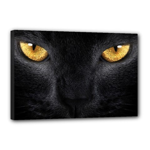 Face Black Eye Cat Canvas 18  X 12  (stretched)