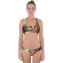 Roaring Lion Cross Back Hipster Bikini Set