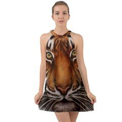 The Tiger Face Halter Tie Back Chiffon Dress