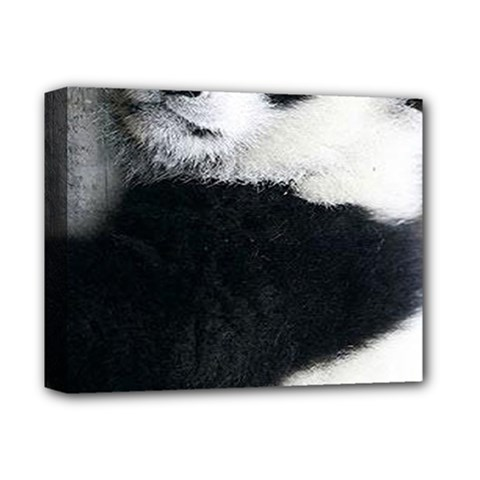 Panda Bear Sleeping Deluxe Canvas 14  X 11  (stretched)