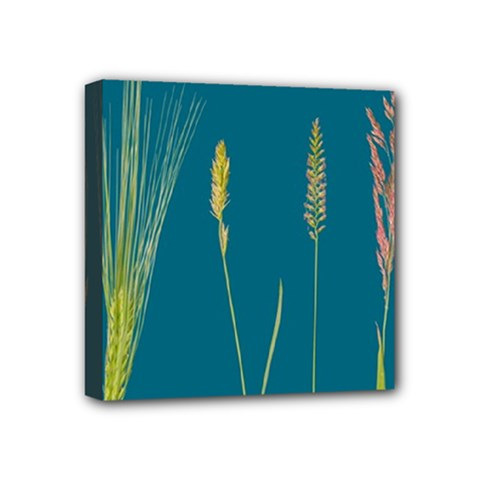 Grass Grasses Blade Of Grass Mini Canvas 4  X 4  (stretched)