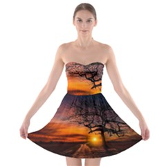 Lonely Tree Sunset Wallpaper Strapless Bra Top Dress