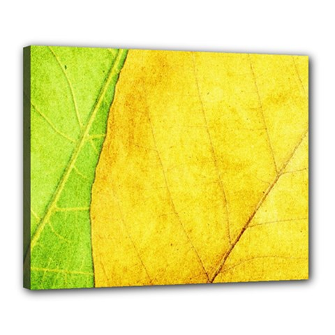 Green Yellow Leaf Texture Leaves Canvas 20  X 16  (stretched)
