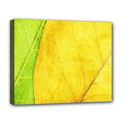 Green Yellow Leaf Texture Leaves Deluxe Canvas 20  X 16  (stretched)