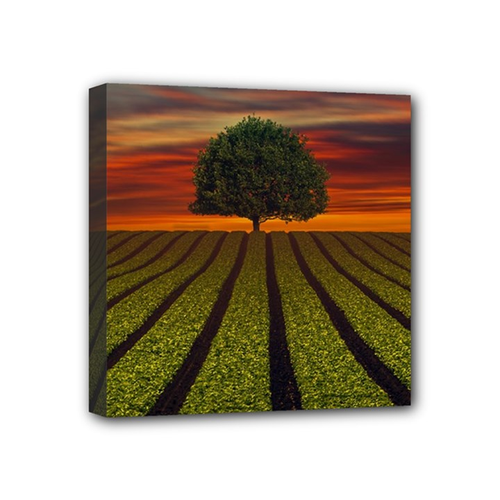 Natural Tree Mini Canvas 4  x 4  (Stretched)