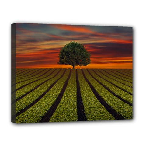 Natural Tree Canvas 14  X 11  (stretched)