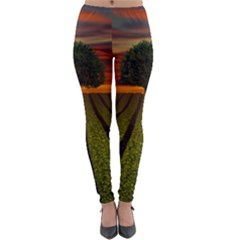 Natural Tree Lightweight Velour Leggings