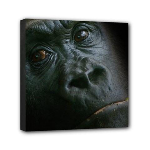Gorilla Monkey Zoo Animal Mini Canvas 6  X 6  (stretched)