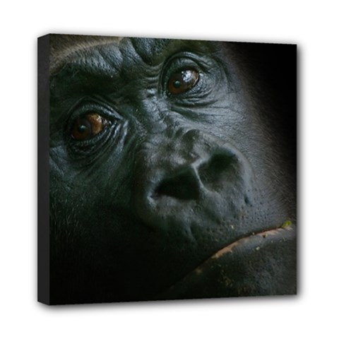 Gorilla Monkey Zoo Animal Mini Canvas 8  X 8  (stretched)