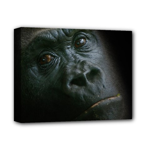 Gorilla Monkey Zoo Animal Deluxe Canvas 14  X 11  (stretched) by Nexatart