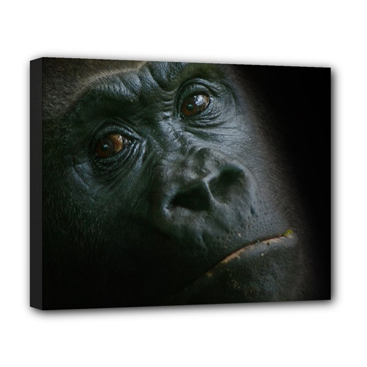 Gorilla Monkey Zoo Animal Deluxe Canvas 20  x 16  (Stretched)