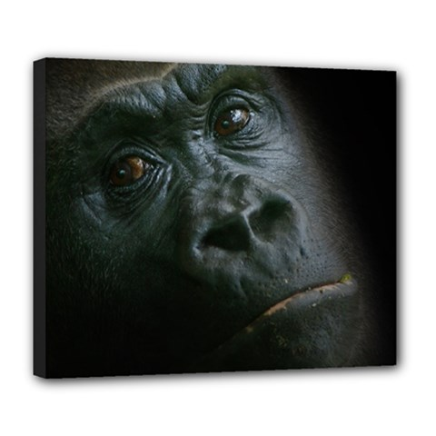Gorilla Monkey Zoo Animal Deluxe Canvas 24  X 20  (stretched) by Nexatart
