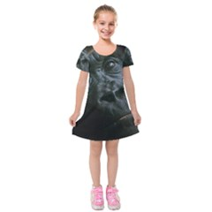 Gorilla Monkey Zoo Animal Kids  Short Sleeve Velvet Dress