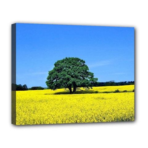 Tree In Field Canvas 14  X 11  (stretched)
