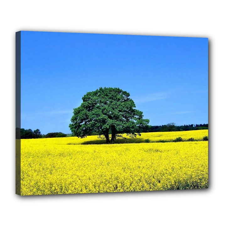 Tree In Field Canvas 20  x 16  (Stretched)