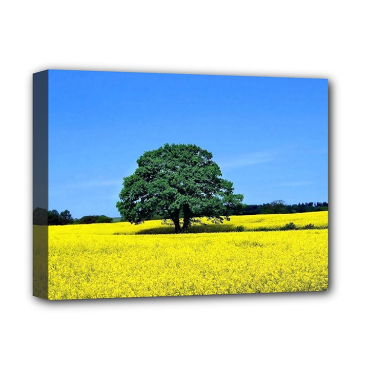 Tree In Field Deluxe Canvas 16  x 12  (Stretched)