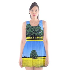 Tree In Field Scoop Neck Skater Dress