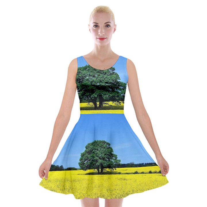 Tree In Field Velvet Skater Dress
