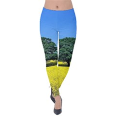 Tree In Field Velvet Leggings